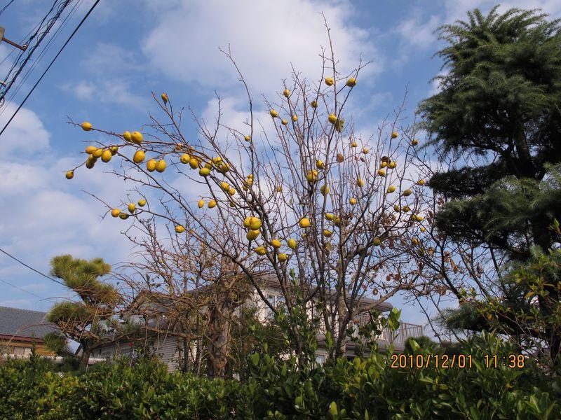 ●800でIMG_0174花梨木●S