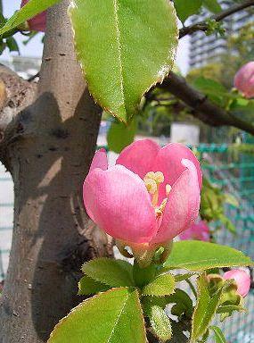 ●800で季節の花300かりん
