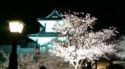 櫻convert_20110415083212