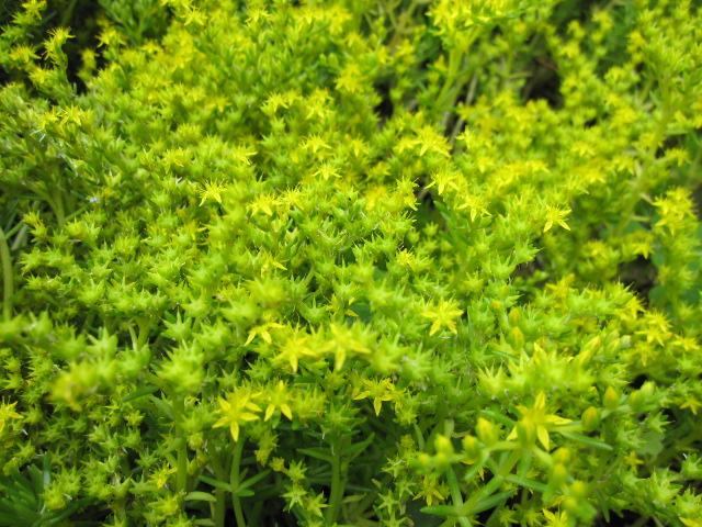 みどりのしょくぶつに黄色い花が・・・