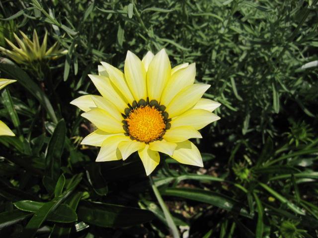 花です はな