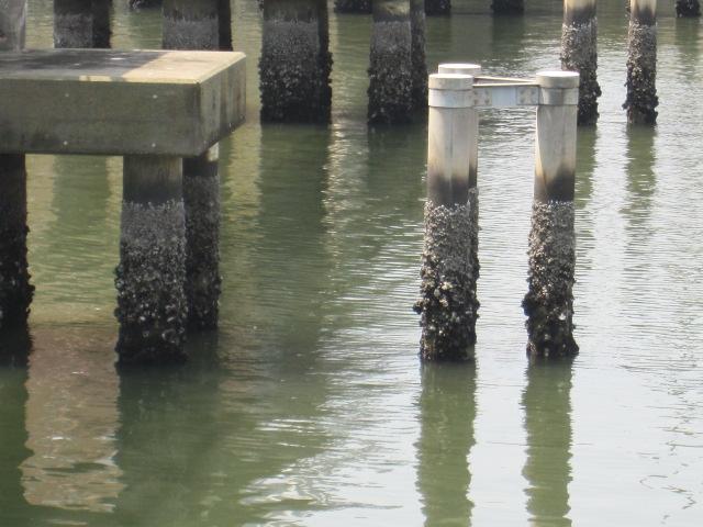 朝潮運河の片隅
