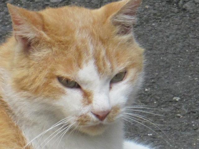 ネコの顔 アップ