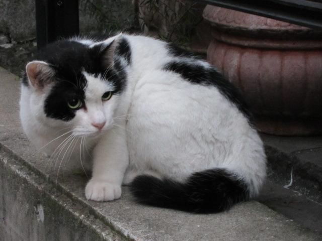 子猫とにらみ合うネコ