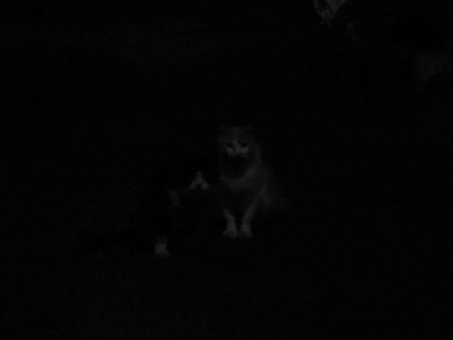 暗闇にネコ&ねこ