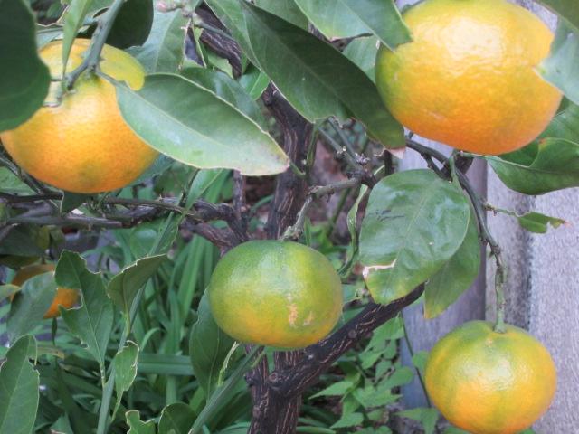みかんかしら? 柑橘系よね。