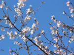 秋の桜902