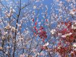 桜091102
