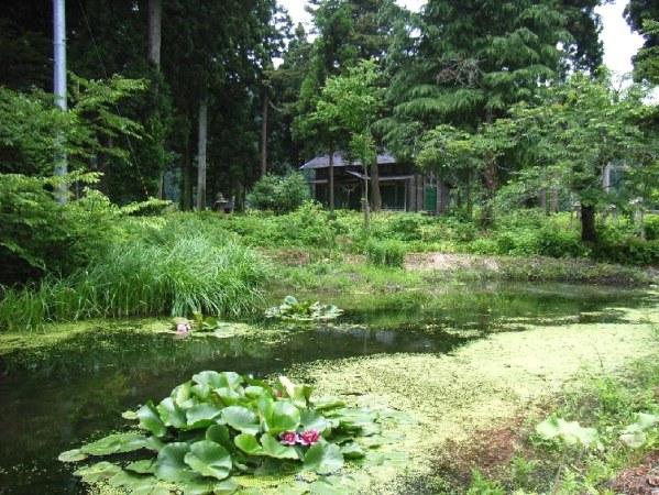 土沢神社近くのタニシ池