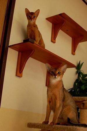 カトリと小町