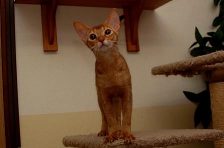 カトリです