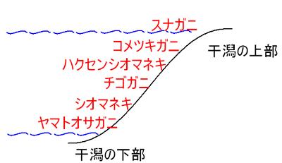 スナガニ科の垂直分布図