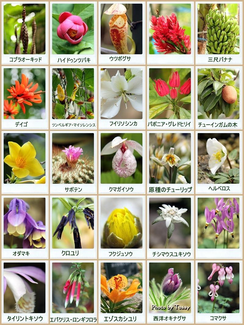 咲くやこの花 collage