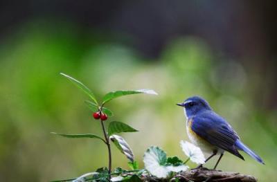 小鳥遊 400