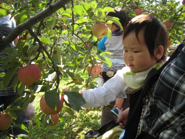 りんごs_2010_10_7_6
