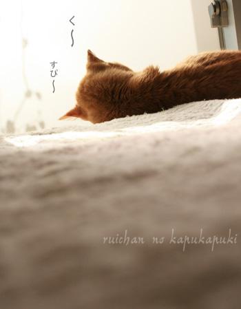 20100131_ruichan_001.jpg