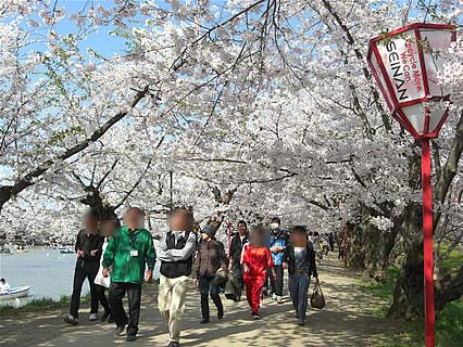 弘前公園 さくらまつり(2011年) 桜のトンネル-3