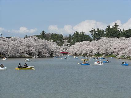 弘前公園 さくらまつり(2011年) 橋の上から見た桜のトンネル