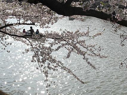 弘前公園 さくらまつり(2011年) 手漕ぎボート