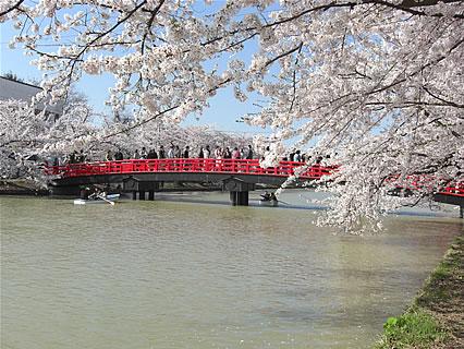 弘前公園 さくらまつり(2011年) 春陽橋