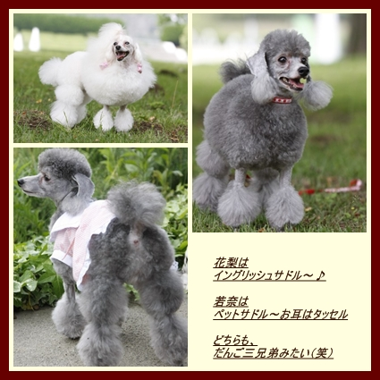 waka_kari-sadoru.jpg
