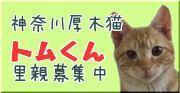 banner_tom.jpg