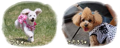 cats1_20110508230836.jpg