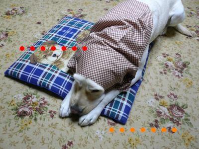 P1010569_convert_20101212001309.jpg