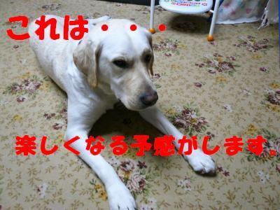 P1010681_convert_20101227175739.jpg
