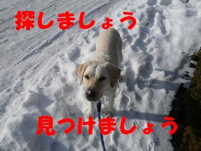 P1010687_convert_20101227195013.jpg