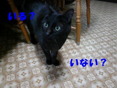 P1010698_convert_20101227190133.jpg