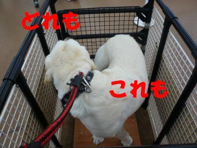 P1010749_convert_20110106225241.jpg