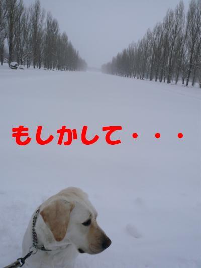 P1010758_convert_20110109234052.jpg