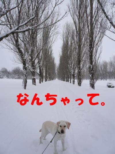 P1010760_convert_20110109234120.jpg