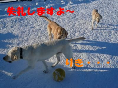 P1010855_convert_201102011744561.jpg