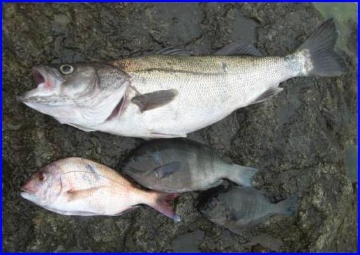 2011701 釣果