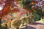織姫神社の紅葉