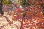 全山が紅葉