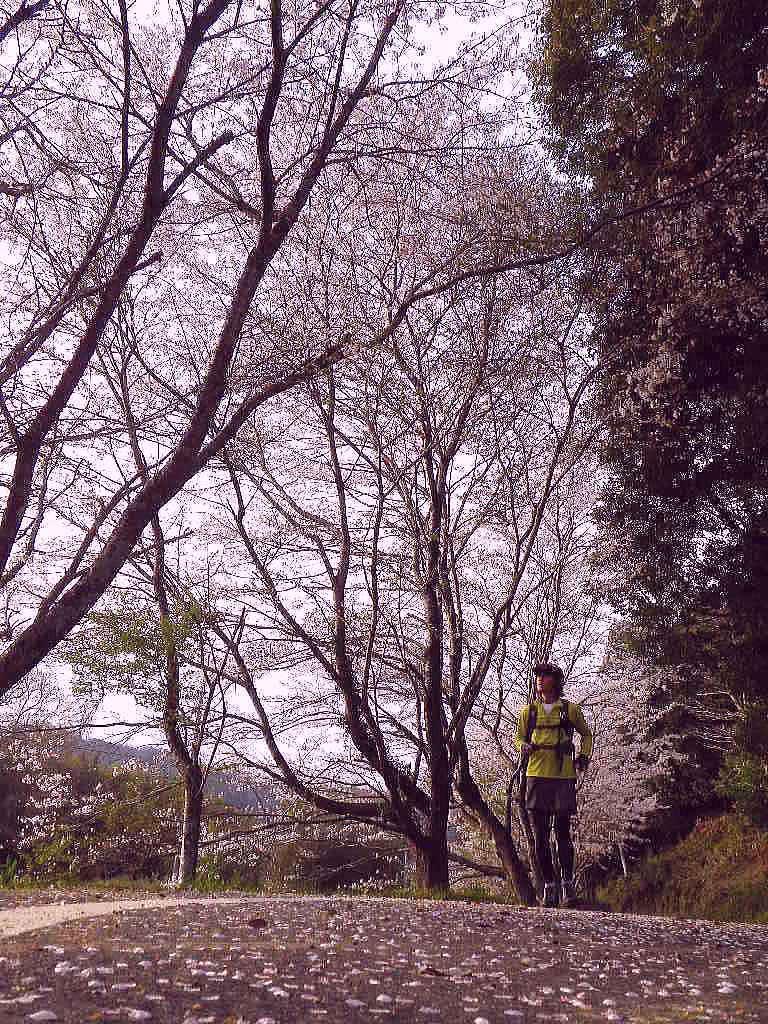 daishiyama2