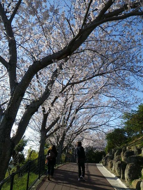 tateyama_park6