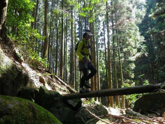 trail29