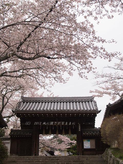 2012年 毘沙門堂・桜1