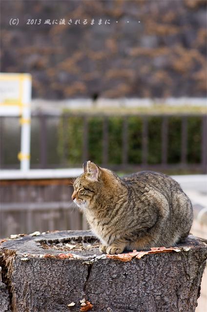 2013年 大阪城梅園の猫1