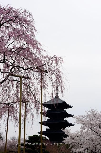 京都・東寺 五重塔としだれ桜1