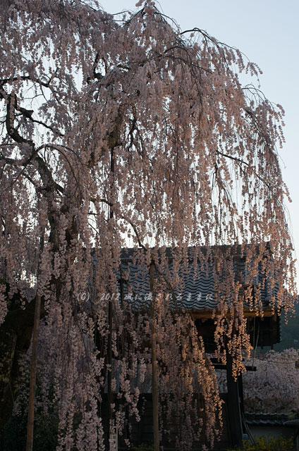 奈良・大野寺1