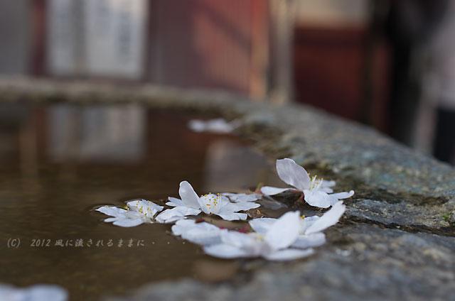 2012年 四天王寺の桜3