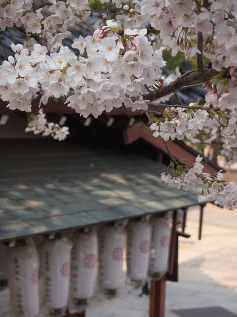 2012年 四天王寺の桜4