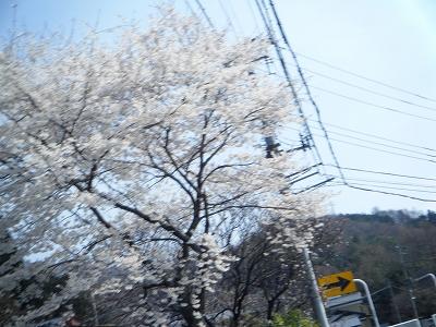2011_0403BRM4020028.jpg