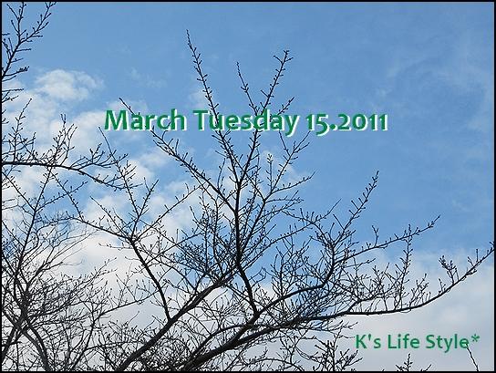 3月15日.jpg