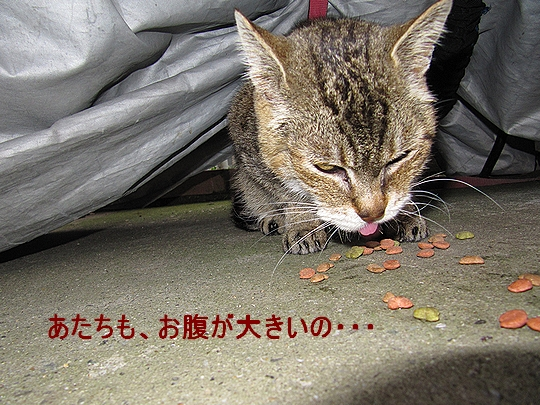 ニャロメ今年も出産!.jpg